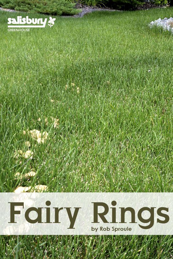 154 Best Fairy Ring Images On Pinterest