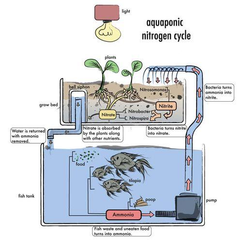 Aquaponics http://vur.me/tbw/aquaponic-store