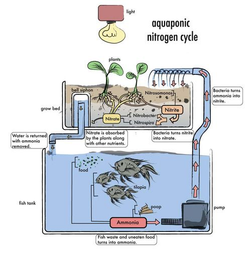 Aquaponics design.  the only threat is you may suck up small fish through the pump.  Use large fish and of course it won't matter.