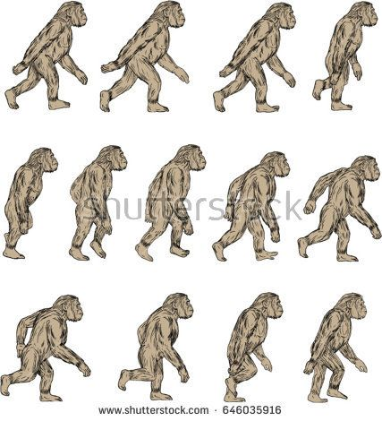 Collection set of illustrations of Homo habilis, a species of the tribe Hominini,  of the Pleistocene period walking viewed from the side  on isolated white background done in drawing sketch style.   #homohabilis #sketch #illustration