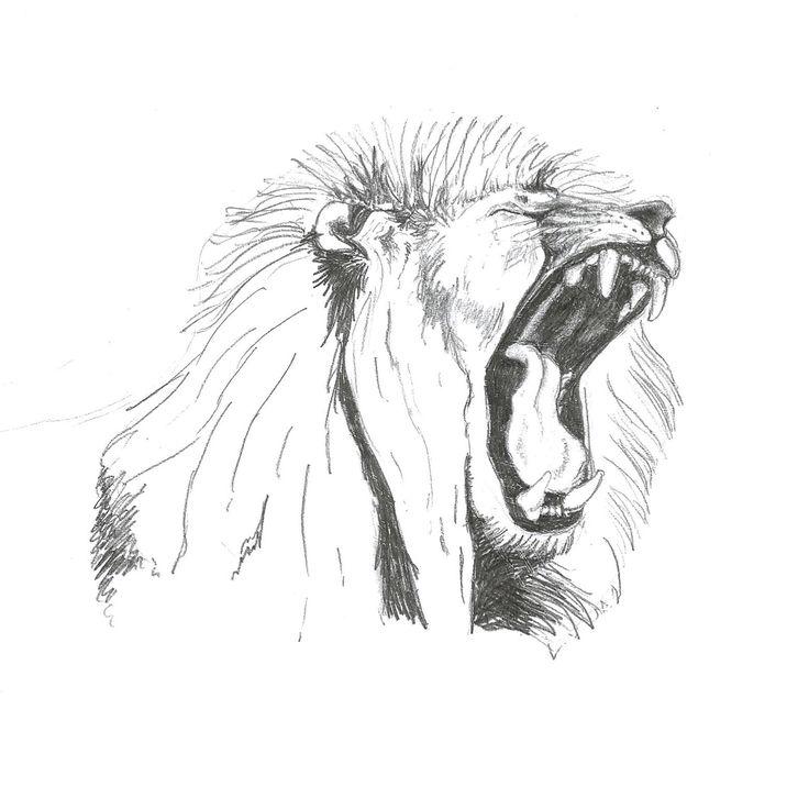Lion Roaring $25  Print, art, drawing ww.petsbypencil.co.nz