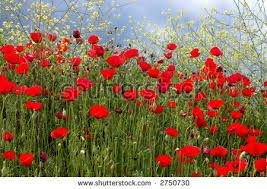 Image result for greece flowers