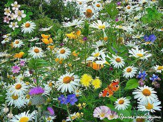Уходит лето,по привычке согревая, Дурманя запахом еще цветущих роз... Уже осеннюю мелодию слагает На струнах радуги седой маэстро дождь..