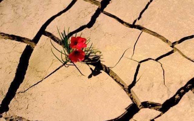 Resilienza come supporto per superare le avversità #resilienza #depressione #fiducia #forza