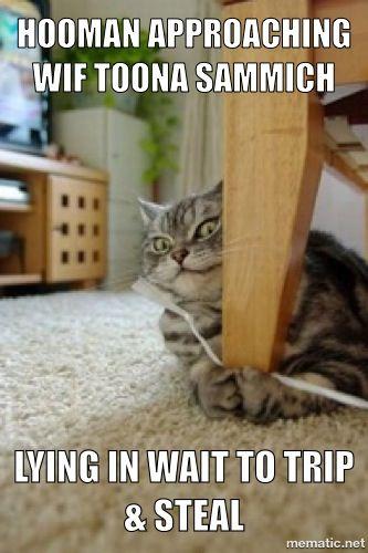Lying in wait =^..^= www.kittyprettygifts.com #cats #cute #lolcats #memes