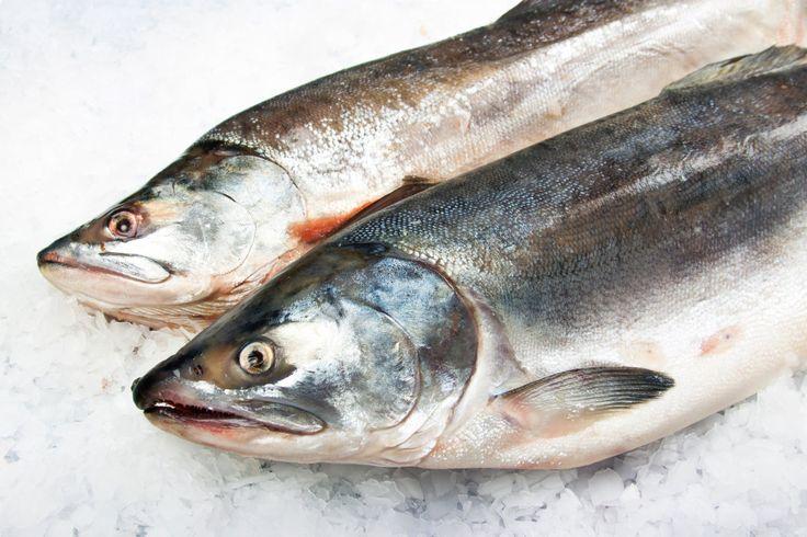 FDA approves world's first GMO fish: fast-growing Atlantic Salmon  http://www.engadget.com/2015/11/19/fda-approves-worlds-first-gmo-fish-fast-growing-atlantic-salmo/