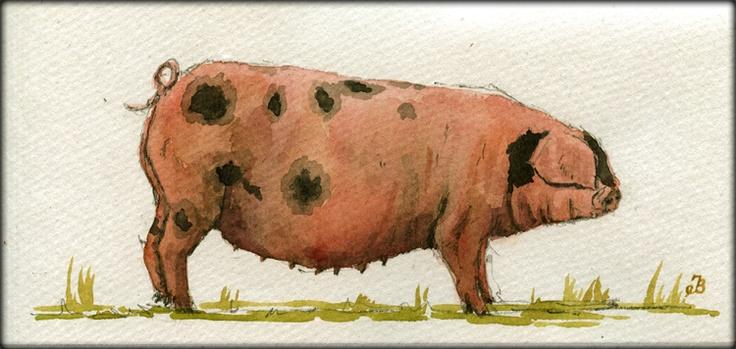 Pig watercolor painting by Juan Bosco