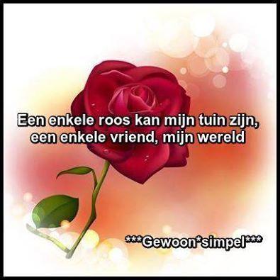 spreuken over rozen