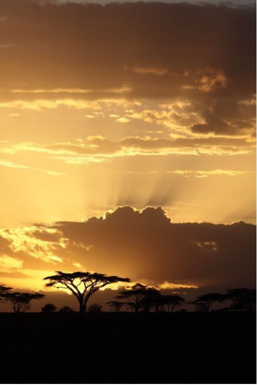 African sunset with Acacia from $34.99 | www.wallartprints.com.au #AfricanArt #TravelPhotography