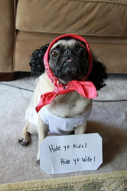 HardyFunny Dogs, Doggie Beds, Halloween Costumes, Dogs Costumes, Funny Pugs, Yo Kids, Hiding Yo, So Funny, Pugs Life