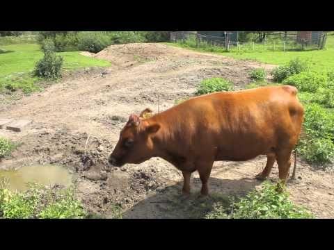 dierengeluiden / animal sounds - YouTube