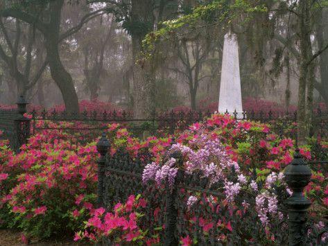 36 Best Images About Savannah Ga On Pinterest Best