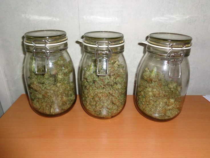 Blue Berry Female Cannabis Seeds end result 212 grams dry.