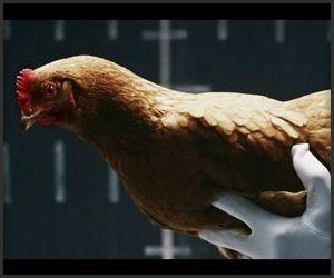Mercedes-Benz: Chickens