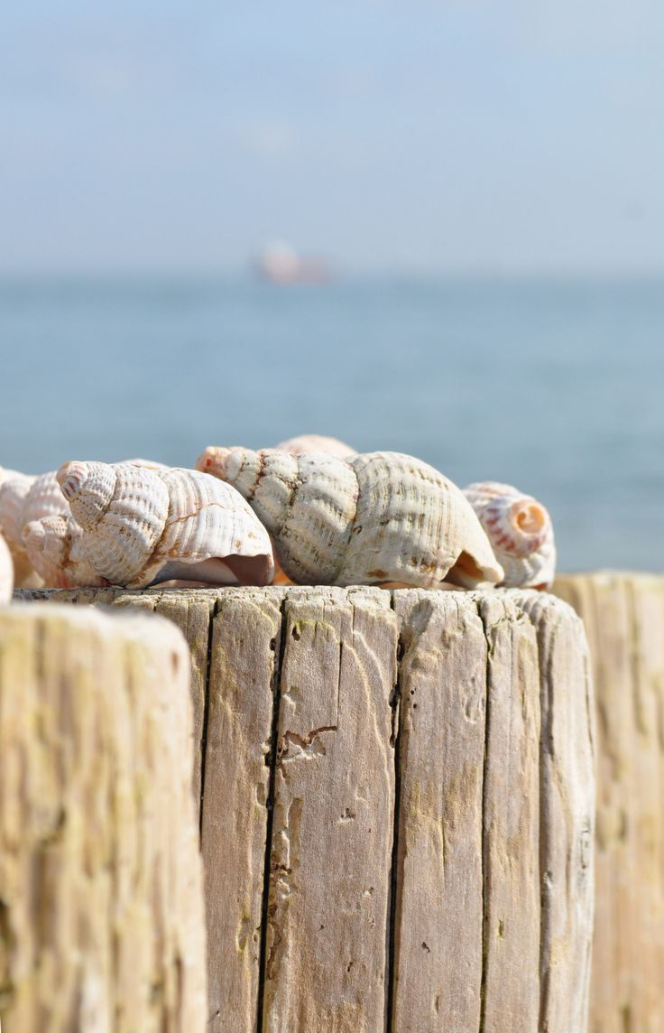 Weathered sea shells on a pier at the beach on a hot summer day #Beach #Vacation For MORE coastal ideas FOLLOW http://www.pinterest.com/happygolicky/beach-beach-beach-off-to-the-coastal-chic-cottage-/ now