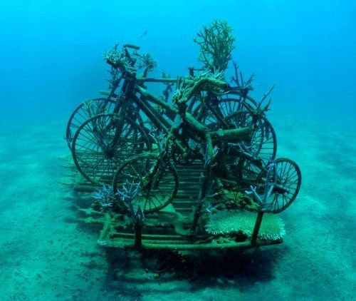 photo of marine biologists' desperate efforts to save the thousands of fragile coral reefs damaged by tourists. The biologists attach the coral to electrified metal frames - and the electrical current sparks accelerated growth, repairing damage caused over decades....
