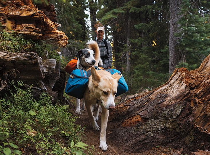 so, I don't have a dog, but...  Approach Pack™ Dog Pack – Backpacking Adventure Pack for Canine Hikes - from Ruffwear