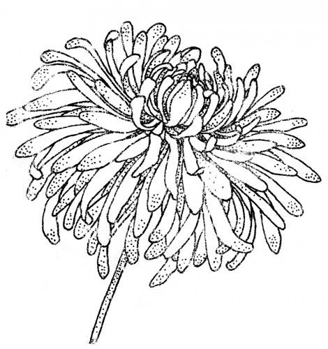 1362 Best Images About Flower Drawings On Pinterest