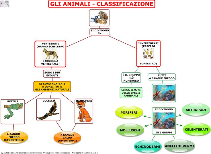 classificazione animali - Cerca con Google