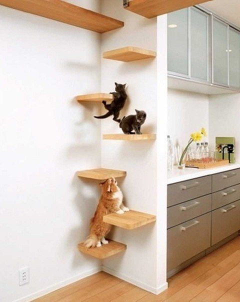 Playgrounds for cats in your apartment