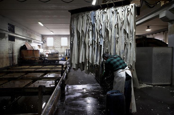 Lamonti Cuoio, San Miniato. Le pellli vengono estratte dopo la concia lenta in vasca.