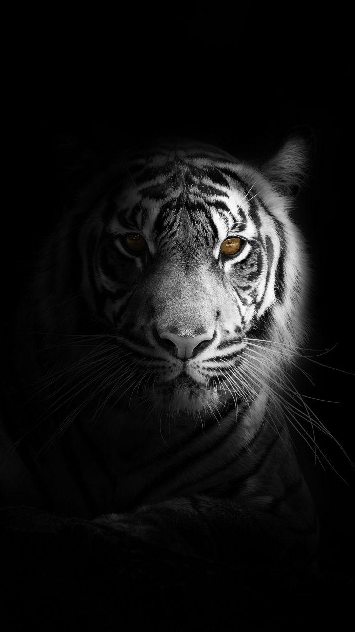 Pin By Sugar Wallpaper On Animal Wallpapers Tiger Photography Tiger Wallpaper Tiger Wallpaper Iphone