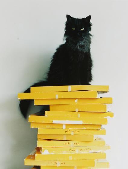 Boxed katten