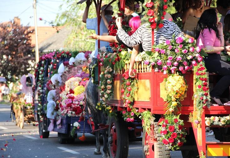 Rose Festival in Szőreg