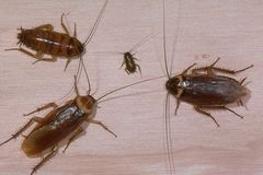 The Best Way to Get Rid of Roaches Permanently | eHow