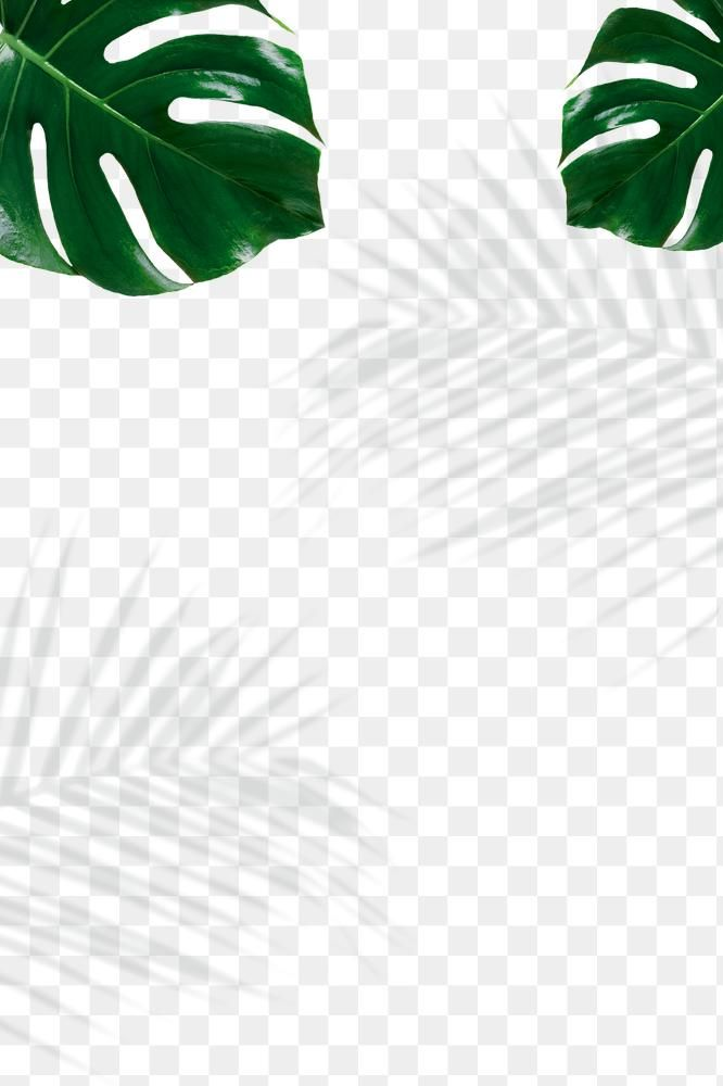 Palm Leaves Shadow Frame Design Element Free Image By Rawpixel Com Nunny Shadow Frame Design Element Frame Design
