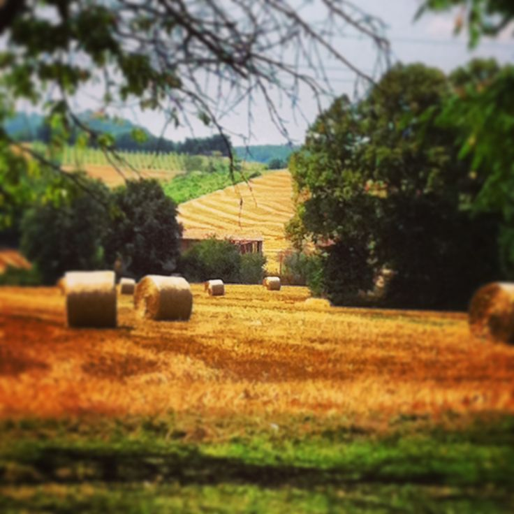 Bologna - rolling hills of gold