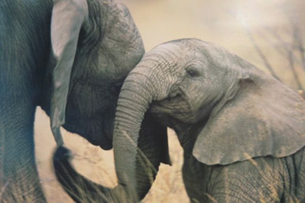 10 Elephants Being Their Cute Selves