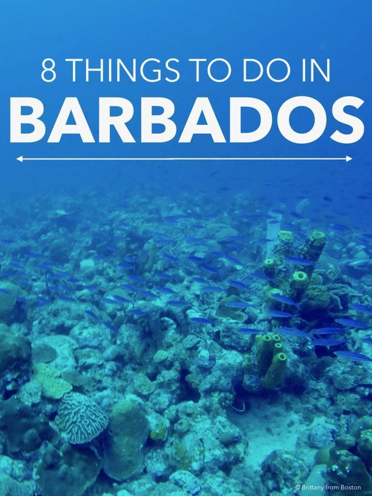 8 Things to do in Barbados // Brittany from Boston