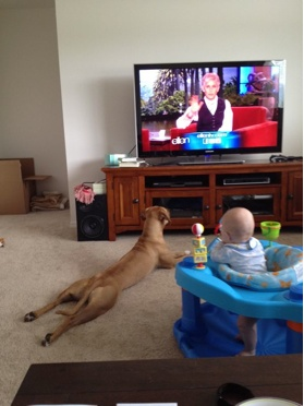 I'm like that dog when I watch Ellen haha but seriously...