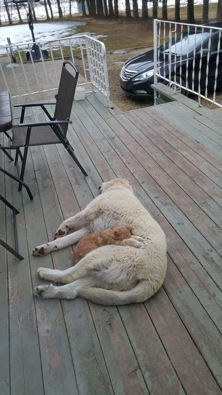 My dog and cat sleep like this often