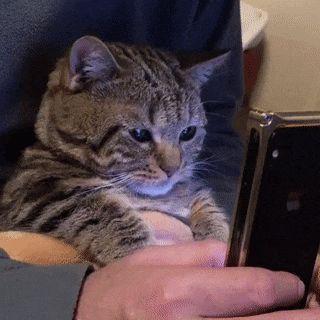 Gemütlich – Katzen