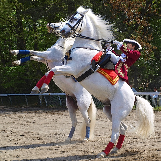 Andalusian horse performance