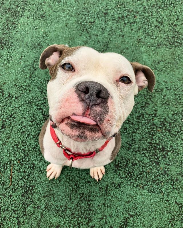 Sweetest Boy Wai Wai Is Excited To Meet You We Re Open Until 7pm