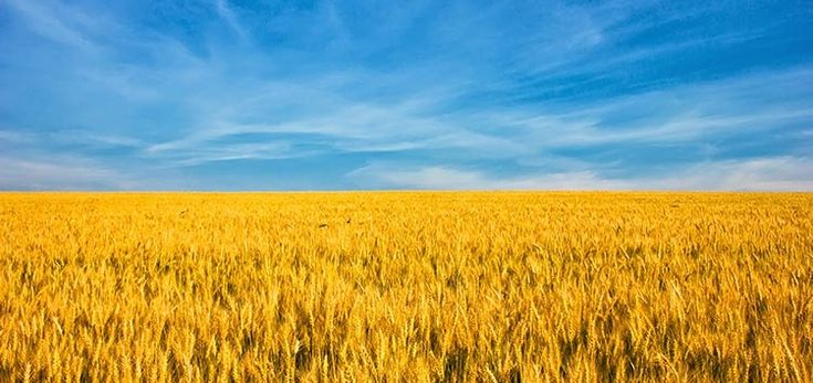 Agribusiness Event: Investing in Ukrainian Food and Agriculture