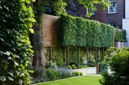 haie de jardin et brise vue avec clôture végétale