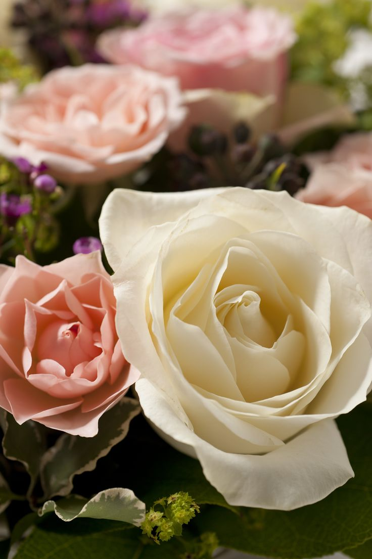 Rose rouge signification fashion designs - Signification rose rose ...