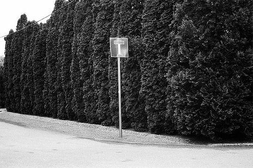 Dante in the city   Nel mezzo del cammin di nostra vita mi ritrovai per una selva oscura ché la diritta via era smarrita.  MIDWAY upon the journey of our life I found myself within a forest dark, For the straightforward pathway had been lost.