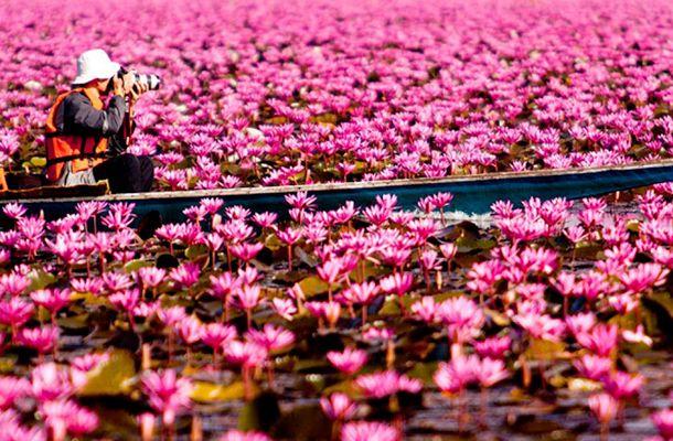 Képek! Hihetetlen gyönyörűséget mutatunk: virágok ezrei borítják be a tavat! | femina.hu