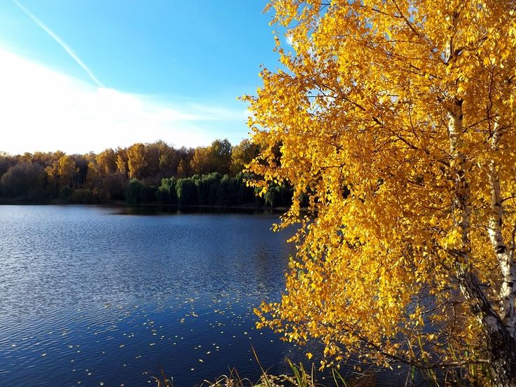 Moscow. Autumn 2013. The park Pokrovskoye-Streshnevo. Москва. Осень 2013. парк Покровское-Стрешнево.
