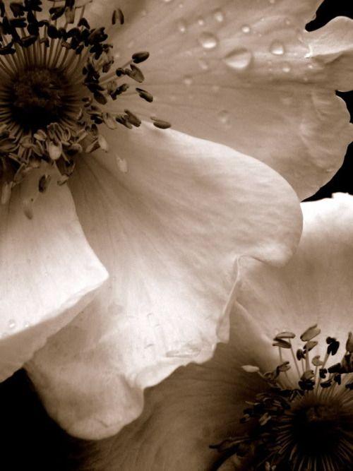 Macro flower beauty  #macro #b #photography  ZsaZsa Bellagio