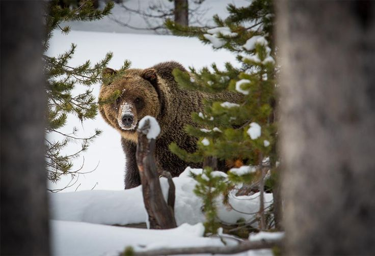 Guardians, allies, and more than 4,000 American citizens are calling on the U.S. Forest Service to amend its misguided revised forest plan for the Flathead National Forest, as well as its directions for managing grizzly bear habitat in the Northern Continental Divide Ecosystem.