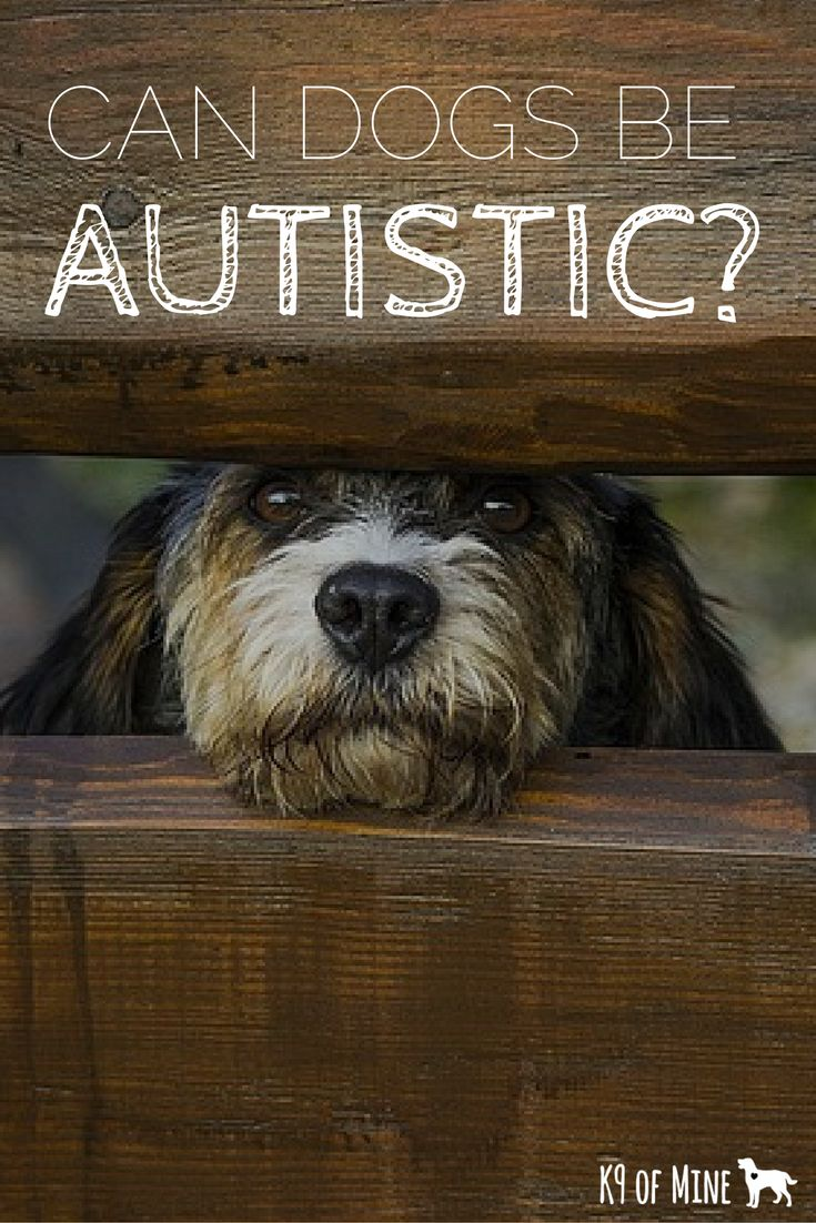 Can dogs be autistic? Read and find out!