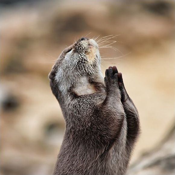 Prayer: The Lord, Design Inspiration, Cute Animal, Prayer, Halloween Costumes Ideas, God, Animal Photography, Sea Otters, Animal Photos