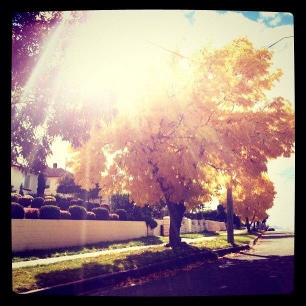 What a day in #NSW! #Cooma never fails to delight.    Statigram – Instagram webviewer