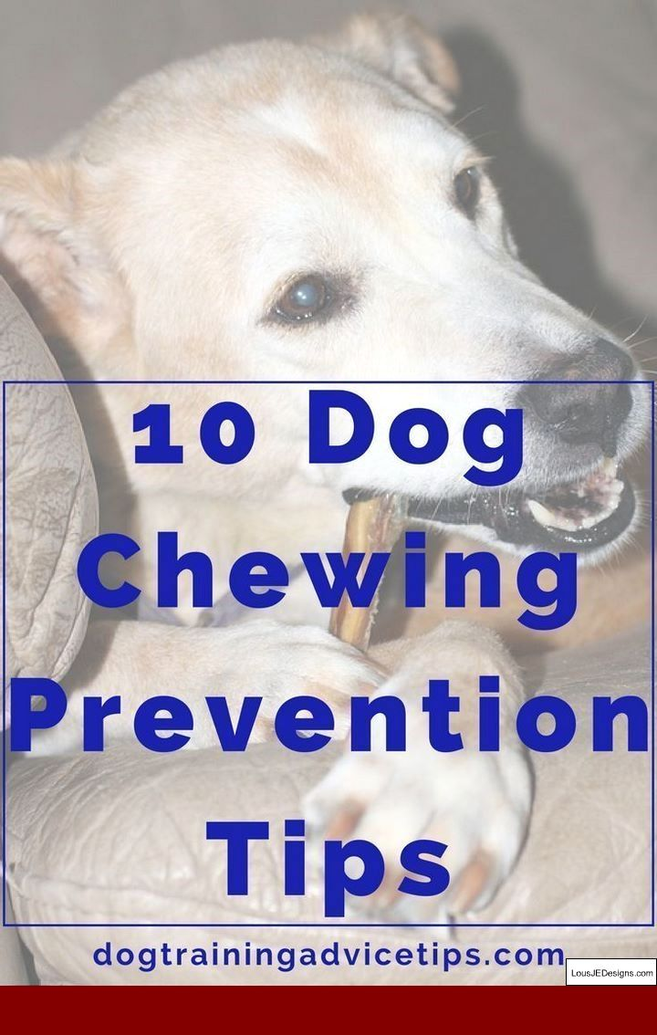 100 Ways To Train The Perfect Dog Pdf And Pics Of How To Train